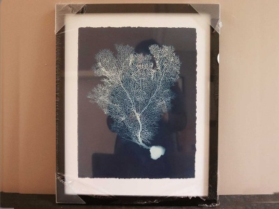 Sea Fan I 43x54cm